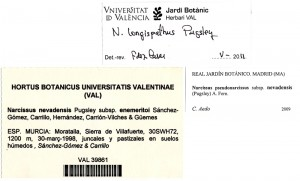 Narciso-Villafuerte-Narcissus-nevadensis-enemeritori-ficha-revisiones-pliego-tipo-Herbario-VAL-39861