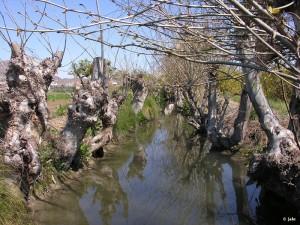 Huerta-de-Murcia-El Esparragal-acequia-Pitarque