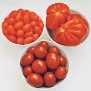 Tomates-variedades-Huerto-Ocio-Aljucer-Programa-Ayuntamiento-Murcia