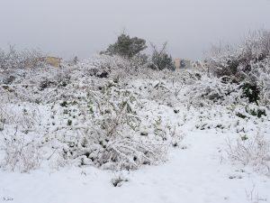Nevada en El Palmar (4 cm de nieve)