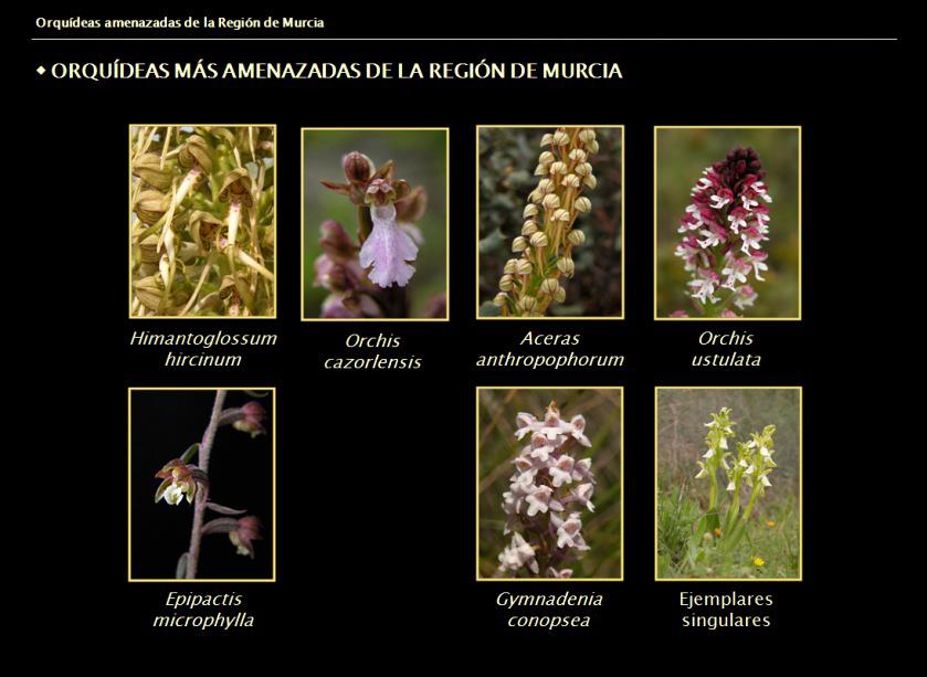 http://www.lopezespinosa.com/joseantonio/orquideas/Diapositiva_charla_orquideas_amenazadas.jpg